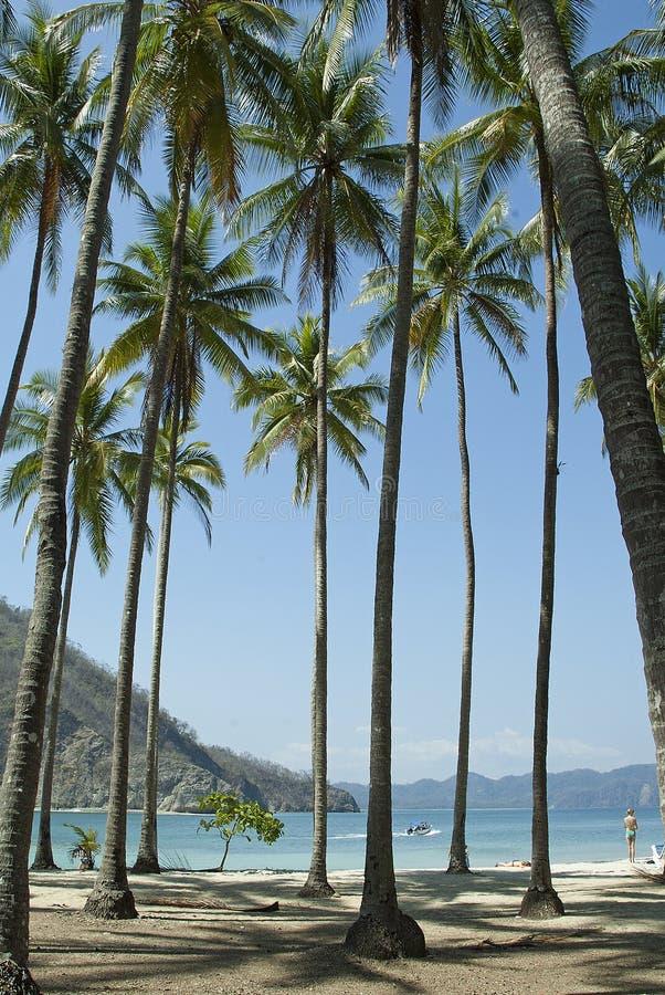 Palm Trees on Tortuga Island royalty free stock photo