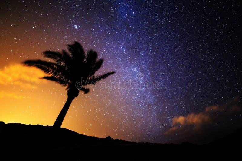 Palm tree starry night Madeira royalty free stock image