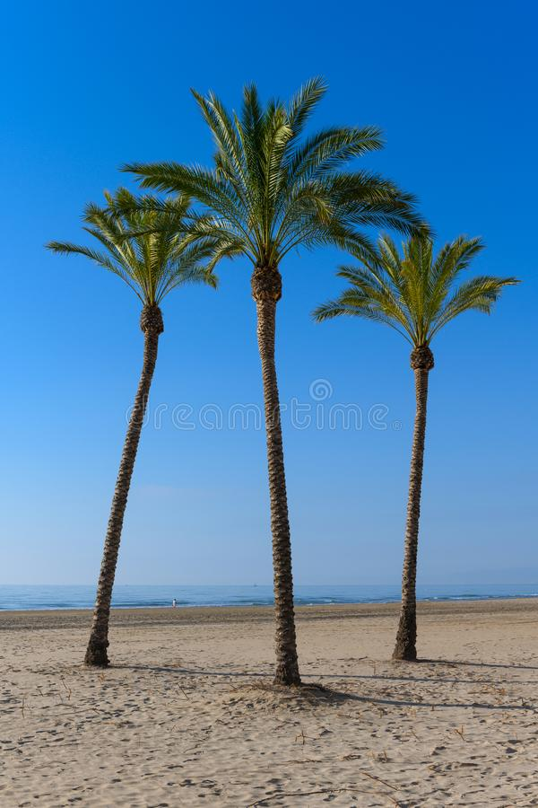 Palm trees at Cullera Beach stock photography
