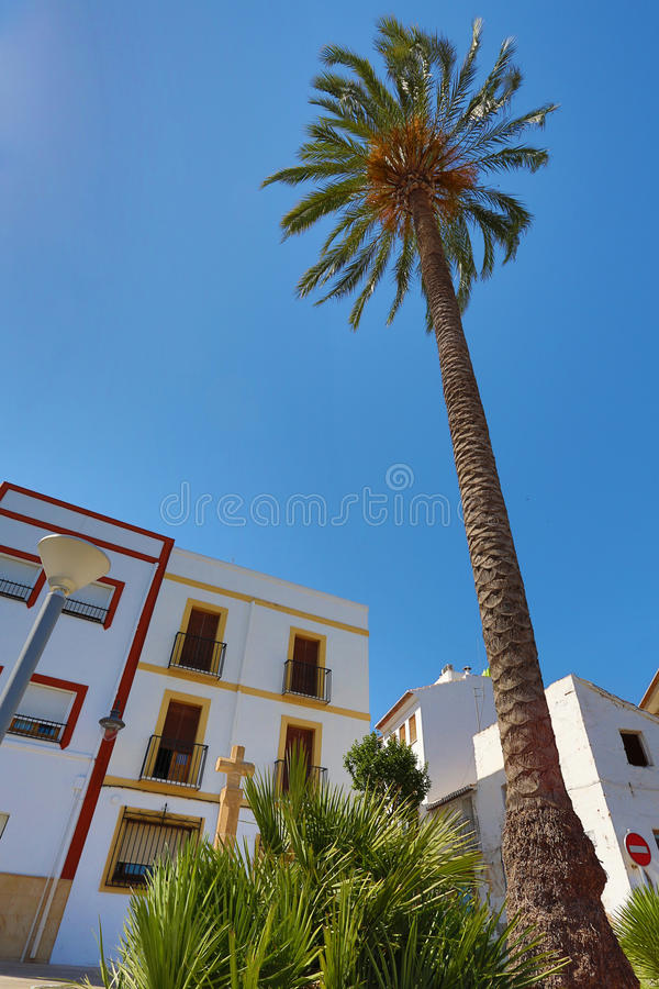 Download Palm Tree on a Street stock photo. Image of street, trees - 25507422