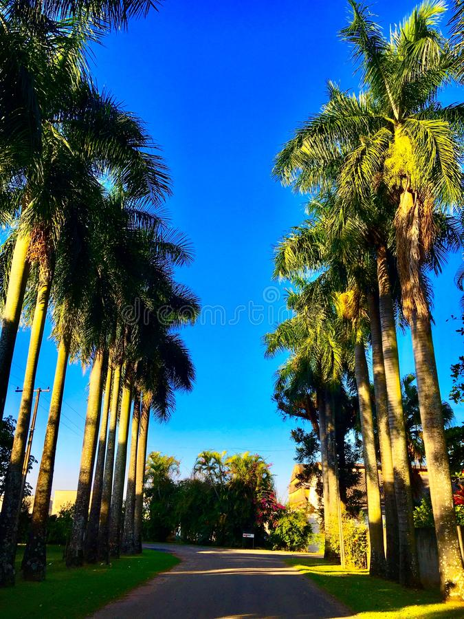 Palm tree street royalty free stock photography