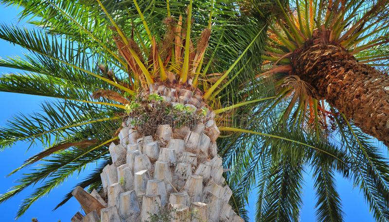 Palm tree summer background stock image