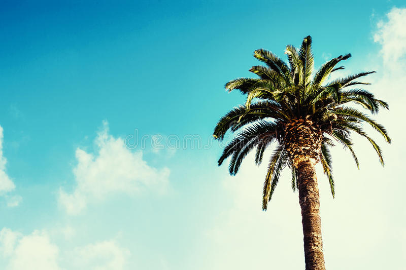 Palm tree / Summer poster / beautiful sky with clouds. Palm tree / Summer poster / beautiful sky stock photos