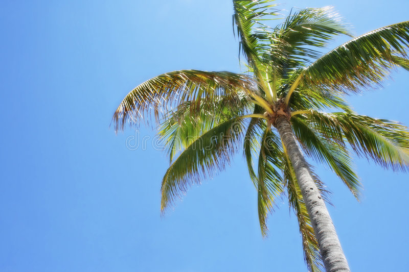 Palm tree sun. Isolated palm tree against a blue sky stock photos