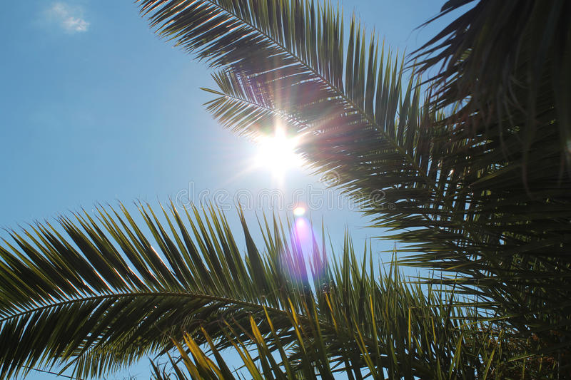 Palm Tree Sun stock images