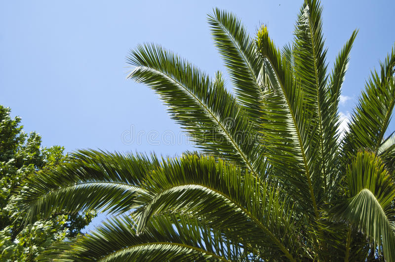 Download Palm tree stock photo. Image of dreaming, afterglow, coast - 33249570