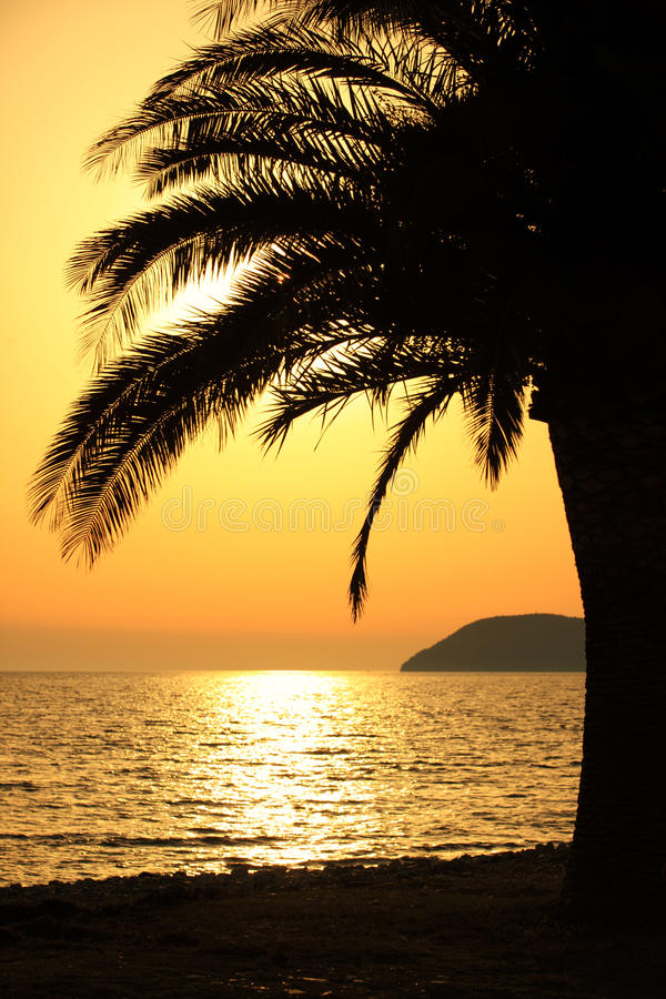 Download Palm tree at sunset stock photo. Image of seascape, outdoors - 25634186
