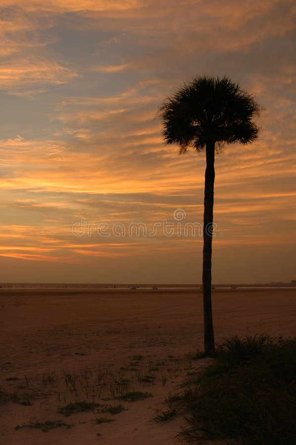 Palm tree at sunset stock photography