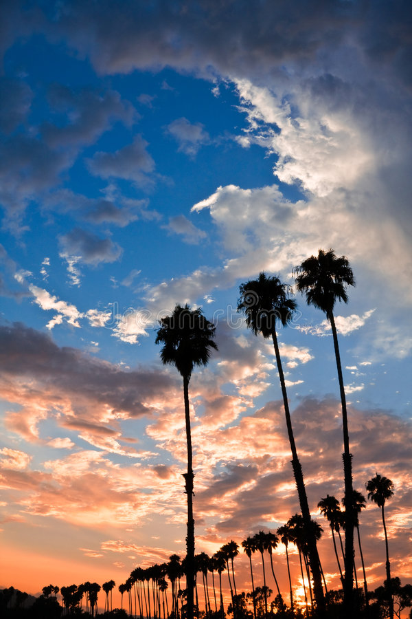 Free Palm Tree Sunset Stock Photos - 6119993