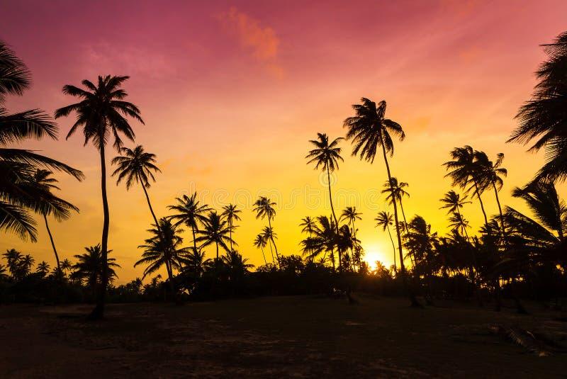 Palm tree sunset stock photography