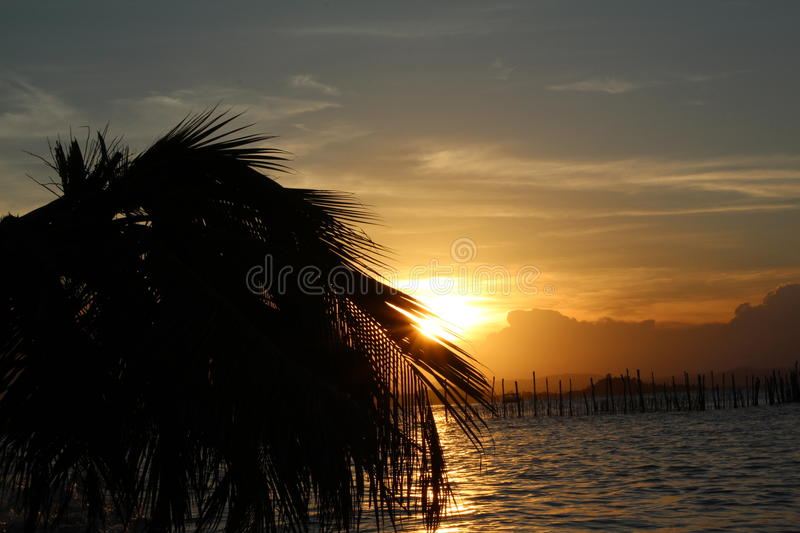 Palm tree in a sunset royalty free stock photo
