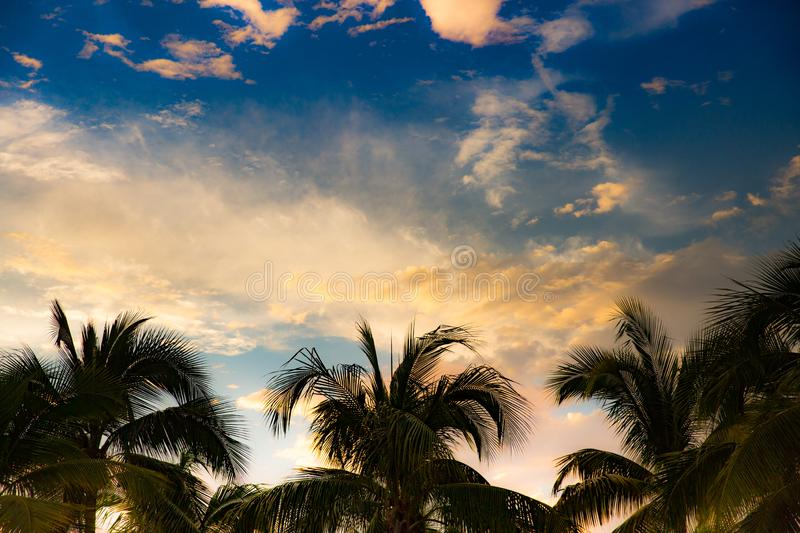 Sunset on Rosita Beach in Centro. Palm Tree Sunset in Centro, Puerto Vallarta, Jalisco, Mexico stock images
