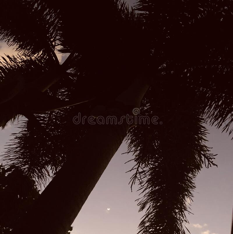 Palm tree in sunset royalty free stock images