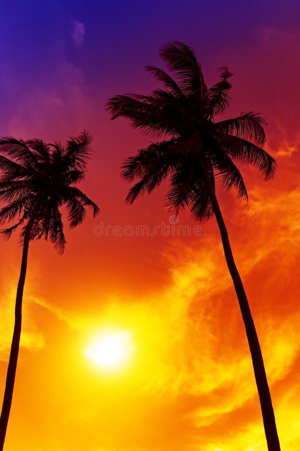 Free Palm Tree Sunset On Beach Royalty Free Stock Image - 32113206