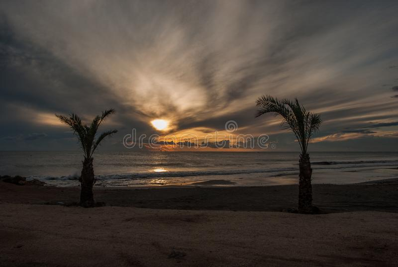 Palm tree at sunset royalty free stock image