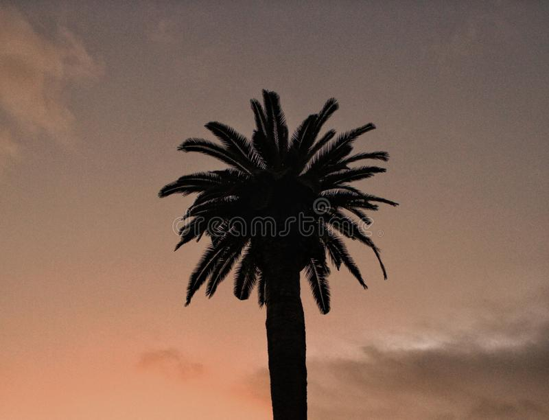 Palm tree at sunset. A photography of palm tree at sunset royalty free stock images
