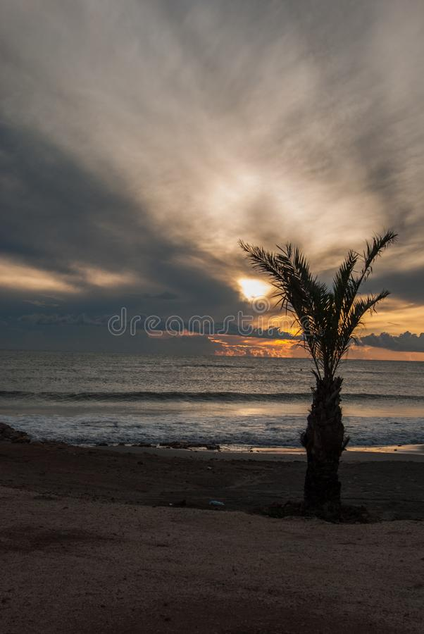 Palm tree at sunset royalty free stock photography