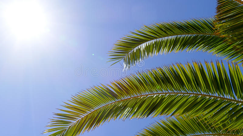 Palm tree with sunshine background stock images