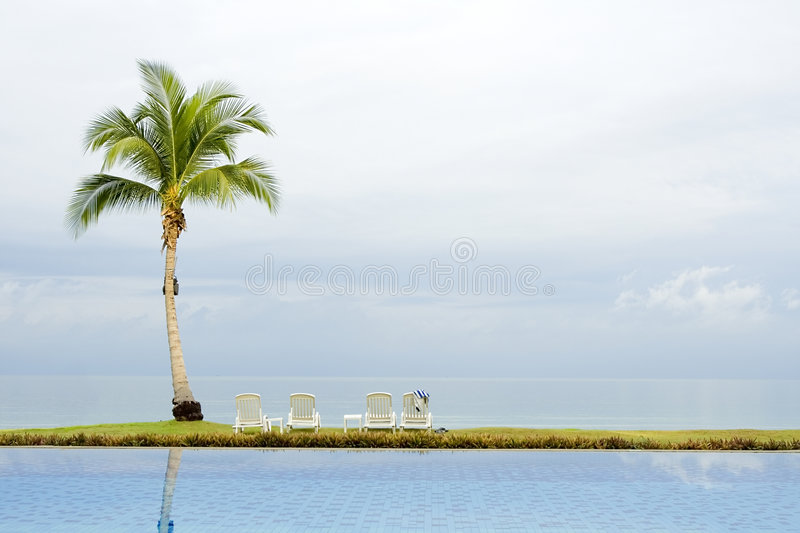 Palm tree by a swimming pool royalty free stock photo