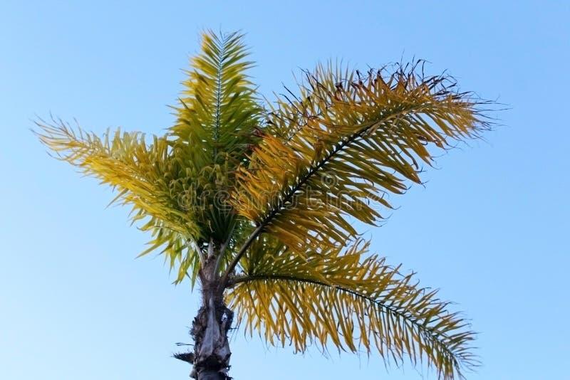 Palm Tree The Symbol Of California Coast Stock Photo Image Of