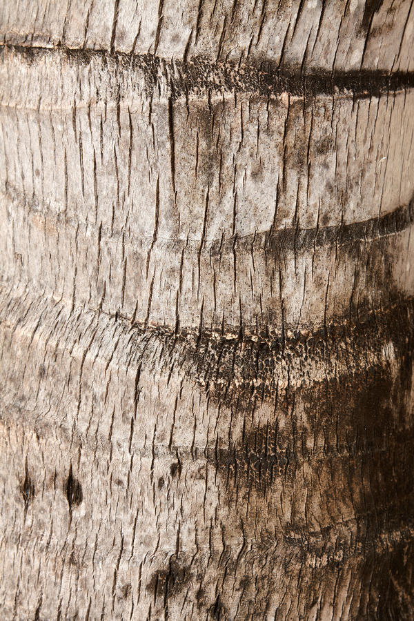 Download Palm Tree Texture Stock Photos - Image: 20123223