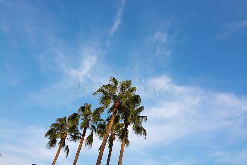Palm tree top against blue skies. In Mallorca, Spain royalty free stock photography