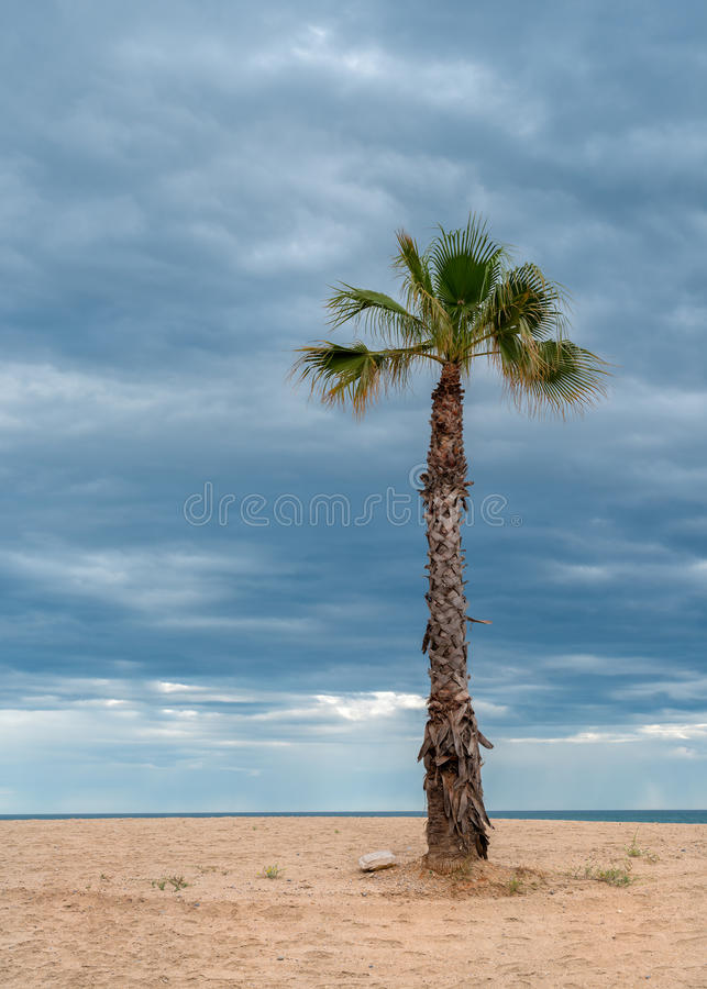 Download The palm tree stock image. Image of scenary, colorful - 31610563