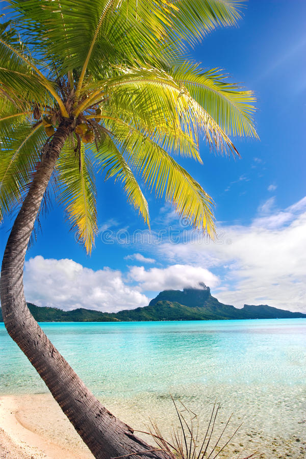 Download Palm tree tropical beach stock image. Image of cloud - 10551777