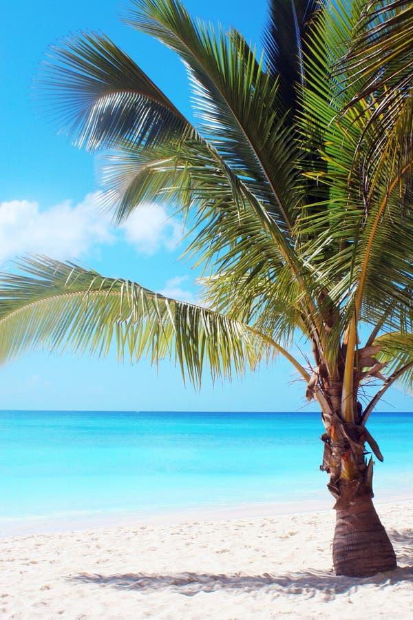 Palm tree on tropical beach royalty free stock photo