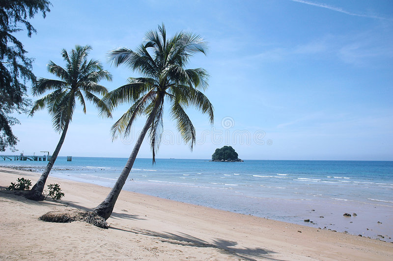 Download Palm Tree On Tropical Beach Stock Photos - Image: 1917543