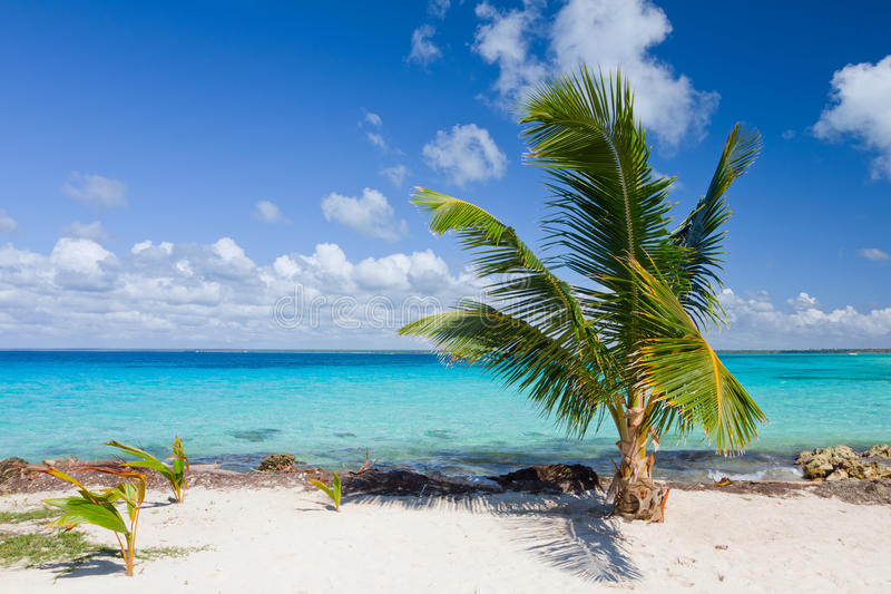 Palm Tree On The Tropical Beach Royalty Free Stock Photography