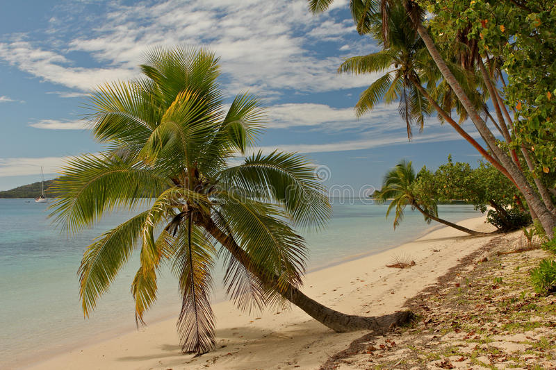Download Palm Tree On Tropical Beach Stock Photo - Image: 26852148