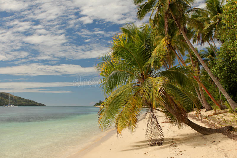 Download Palm Tree On Tropical Beach Stock Photography - Image: 26852162