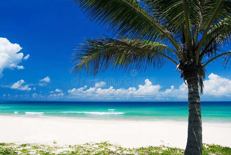 Download Palm Tree On A Tropical Beach Stock Photo - Image: 3211464