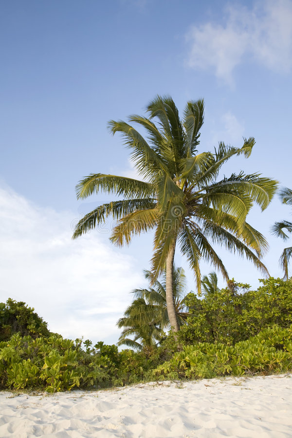 Download Palm Tree On Tropical Beach Stock Image - Image of clouds, beach: 8538559
