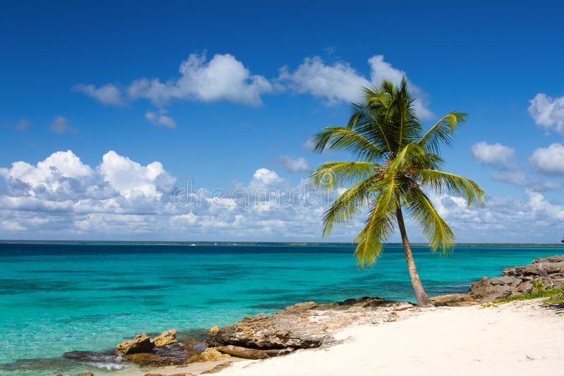Download Palm Tree On The Tropical Beach Stock Photo - Image: 35023808