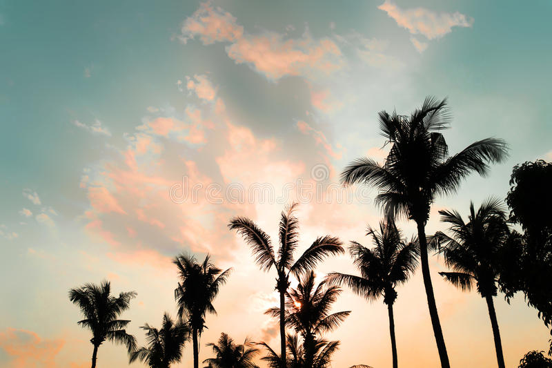 palm tree on the tropical beach with a sunset in summer stock photography