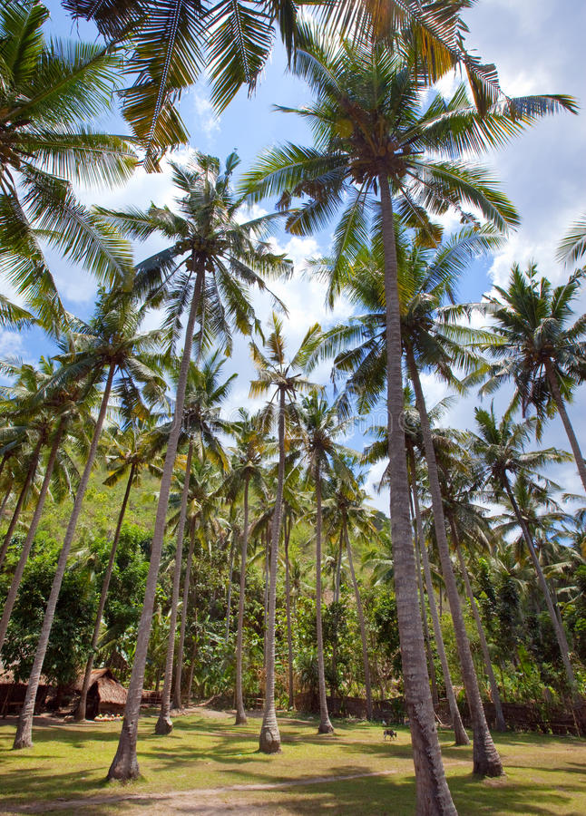 Download Palm Tree. Tropical Landscape Stock Photo - Image: 26906724