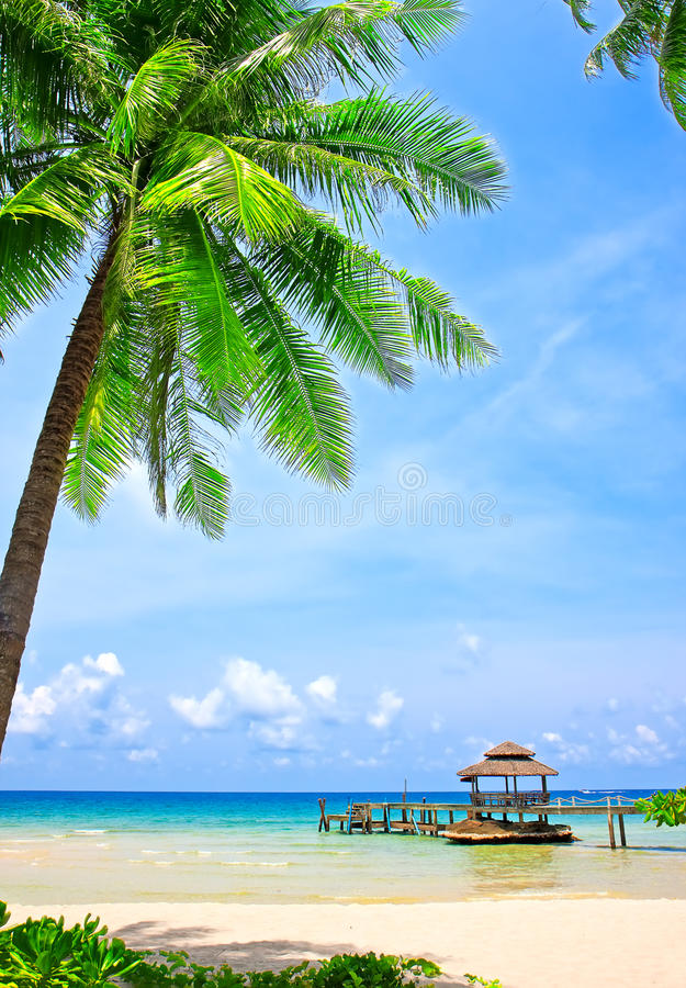 Download Palm Tree In Tropical Perfect Beach Stock Photo - Image: 32599730