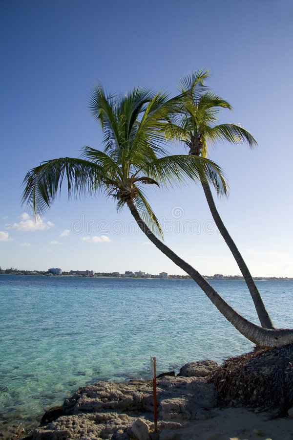 Download Palm Tree Tropical Shoreline Stock Photo - Image: 7279590