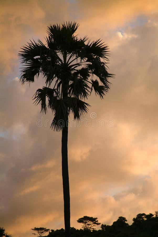 Palm Tree Tropical Sunset, Bali, Indonesia. Palm trees are silhouetted against a tropical sunset on a beach in Bali, Indonesia stock images
