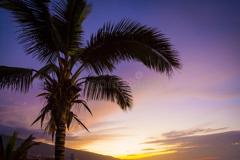 Download Palm Tree In A Tropical Sunset Stock Image - Image: 32744805