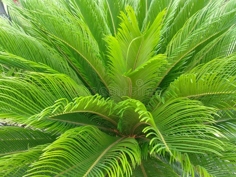 palm tree. Unusual, juicy color, a palm tree in a tropical corner among the urban jungle of Hamburg. Side view. Useful for unobtrusive background royalty free stock photography