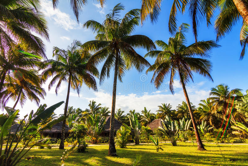Palm tree vacation stock photos