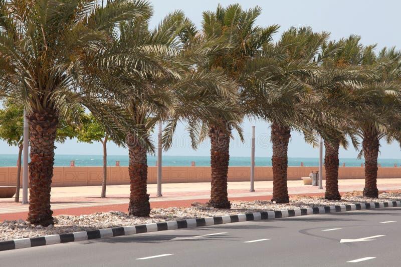 Palm tree vector, palm near the road stock photos