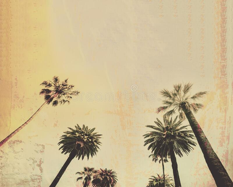 Palm tree vintage style background stock images