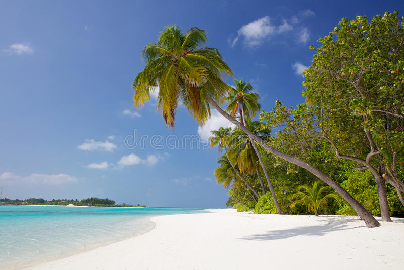 Palm tree on a white sand beach royalty free stock photo