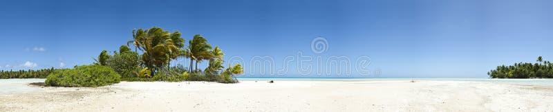 Palm tree and white sand beach panoramic view stock photo