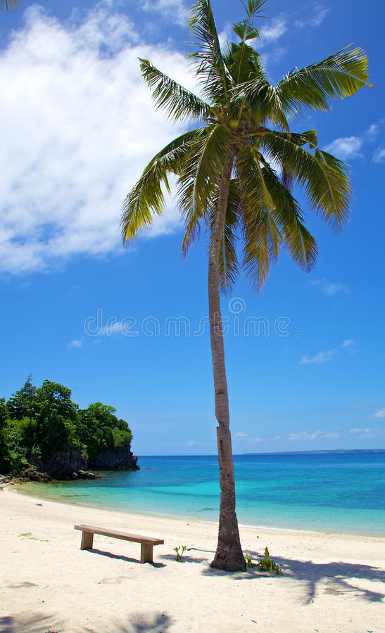 Download Palm Tree On White Sand Tropical Beach On Malapascua Island, Philippines Stock Photo - Image: 28950638