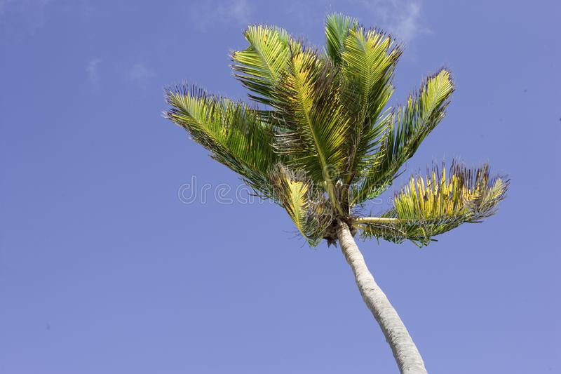 Palm tree in the wind royalty free stock image